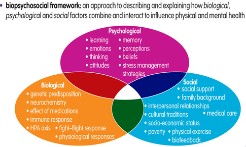 Image result for biopsychosocial model